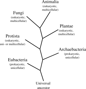 Plantae Unicellular Or Multicellular