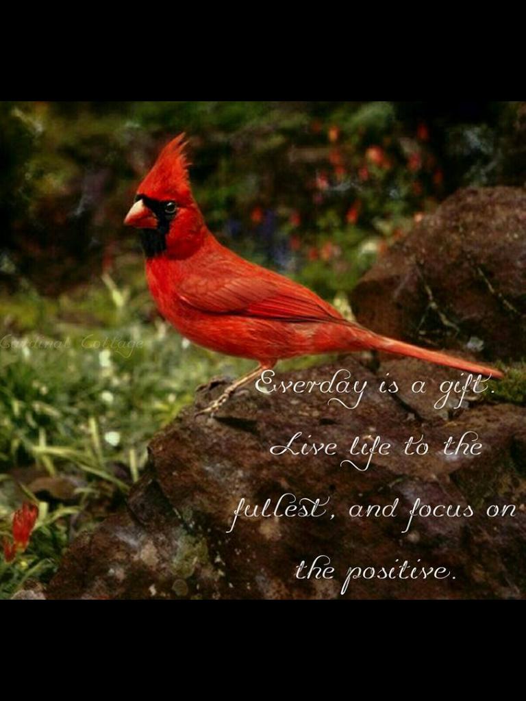 Pin De Hector Horacio Wagner Raies En Aves Aves Hermosas Aves Pajaros