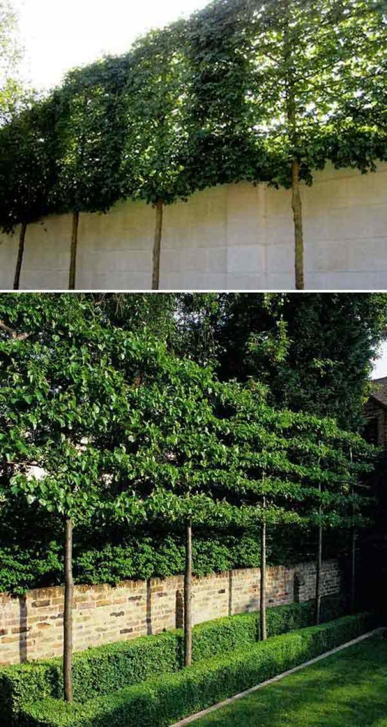 34+ Backyard privacy tree ideas ideas