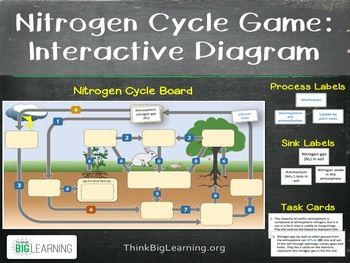 nitrogen cycle interactive diagram (task cards & assessment page labeled diagram of the carbon cycle nitrogen cycle interactive diagram (task cards & assessment page included)