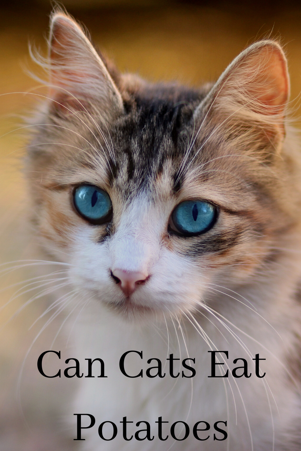 Can Cats Eat Potatoes and Sweet Potatoes? in 2020 Cat