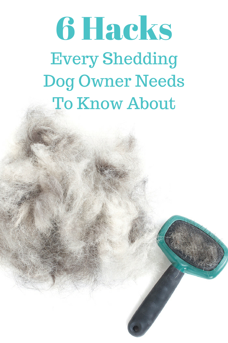 6 Hacks Every Shedding Dog Owner Needs To Know About Dog Shedding Dog Life Hacks Dog Shedding Remedies