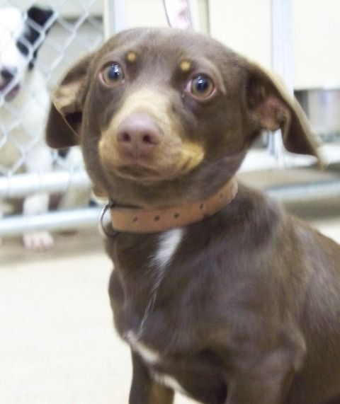 Dog Adoption Sevier County