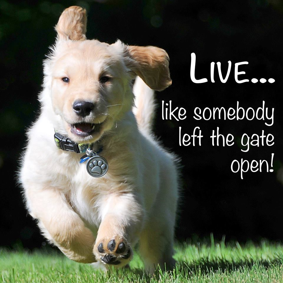 Live Like Somebody Left The Gate Open Unknown Dogs Dog Runs Golden Retriever Baby