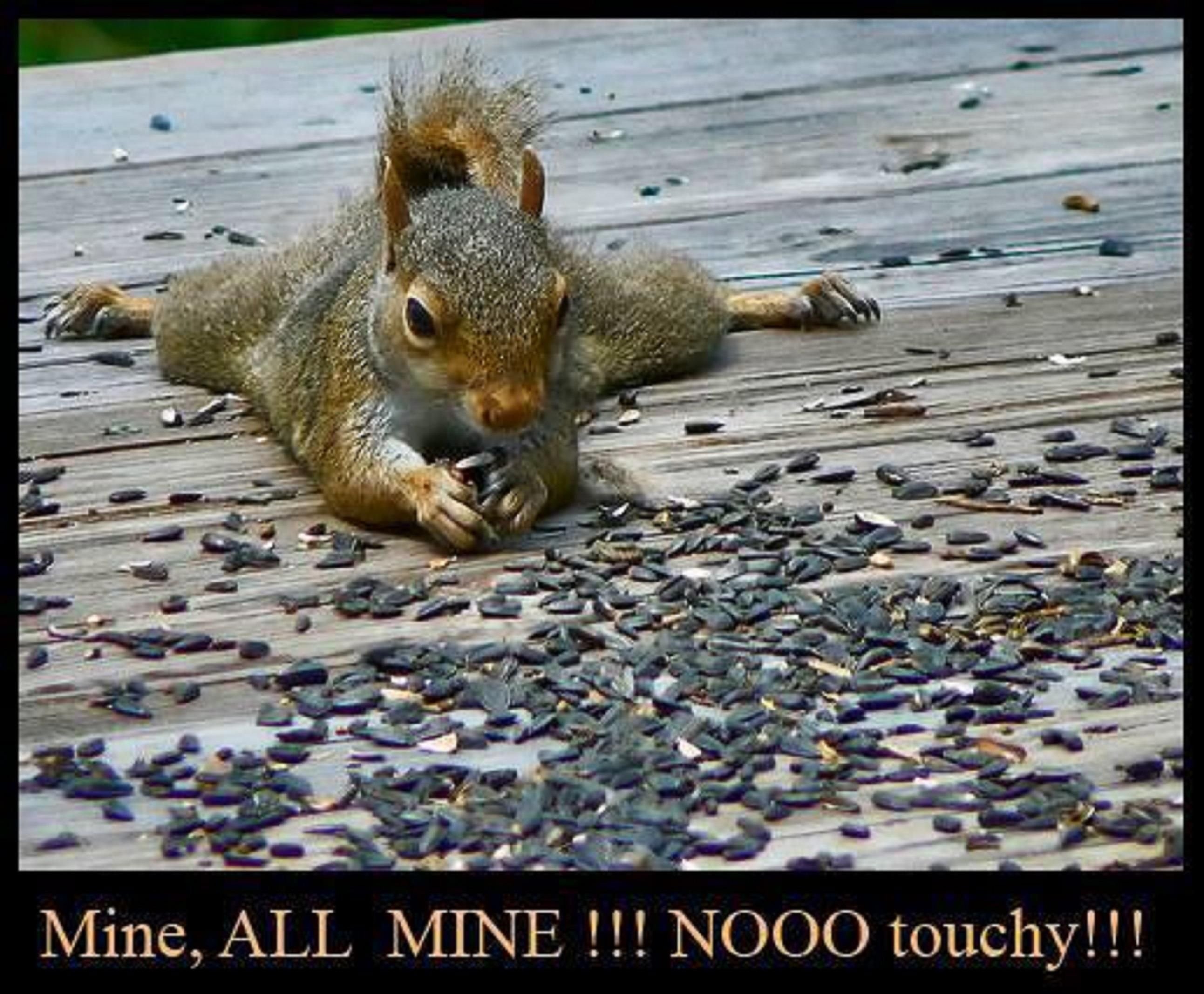 Alfa img - Showing > Fat Squirrels with Jokes | squirrels ...