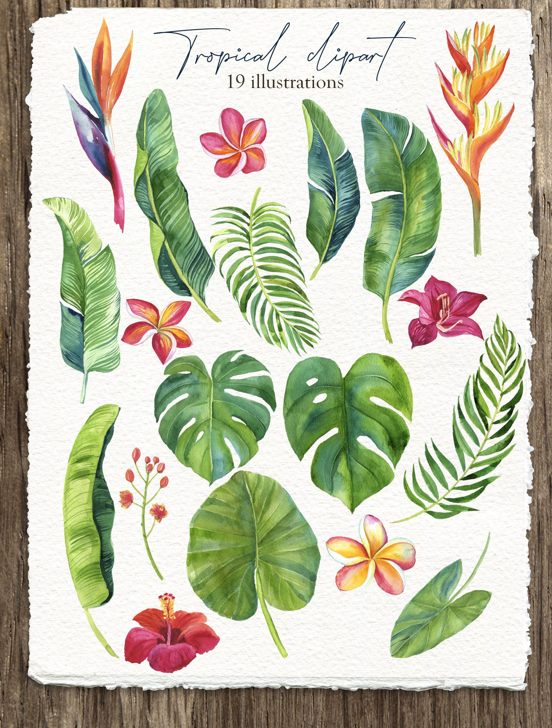 Watercolor floral clipart Digital clipart Tropical Flowers Leaves Monstera Printable digital download Wedding Birthday PNG 19 files -   18 tropical plants Watercolor ideas