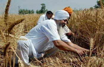 Image result for farmer fire punjab