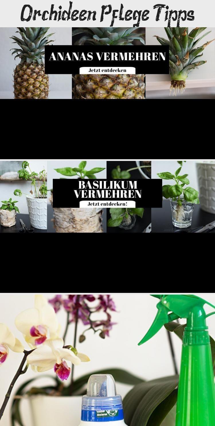 Orchideen Pflege Tipps #orchideenschneiden #orchideenpflege Orchideen Pflege Tipps #orchideenschneiden #orchideenpflege Orchideen Pflege Tipps #orchideenschneiden #orchideenpflege Orchideen Pflege Tipps #orchideenschneiden #hortensienvermehren