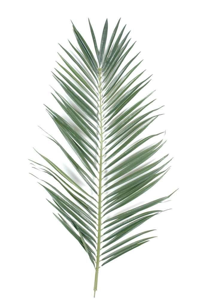 feuille palmier majesty palme 1 plantes vertes cactus et succulentes pinterest tattoo. Black Bedroom Furniture Sets. Home Design Ideas