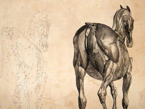 George Stubbs  Anatomy of the Horse  1766