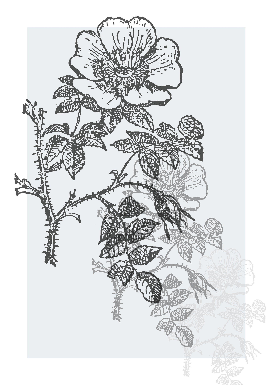 Épinglé sur Flower power
