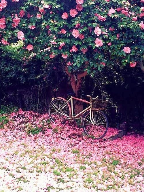 This photo creates happiness in me and so I share it with you. The peace and beauty of riding a bike made visible.