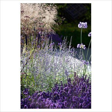 Lavandula 'Hidcote', Perovskia atrip. 'Blue Spire', Deschampsia cespitosa and Agapanthus 'Northern Star' - Vestra Wealth's Vista Garden, RHS Hampton Court Palace Flower Show 2014 - Design: Paul Martin - Sponsor: Vestra Wealth. Photographer: Matt Anker