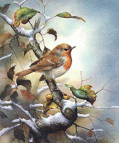 El Catálogo de Aves