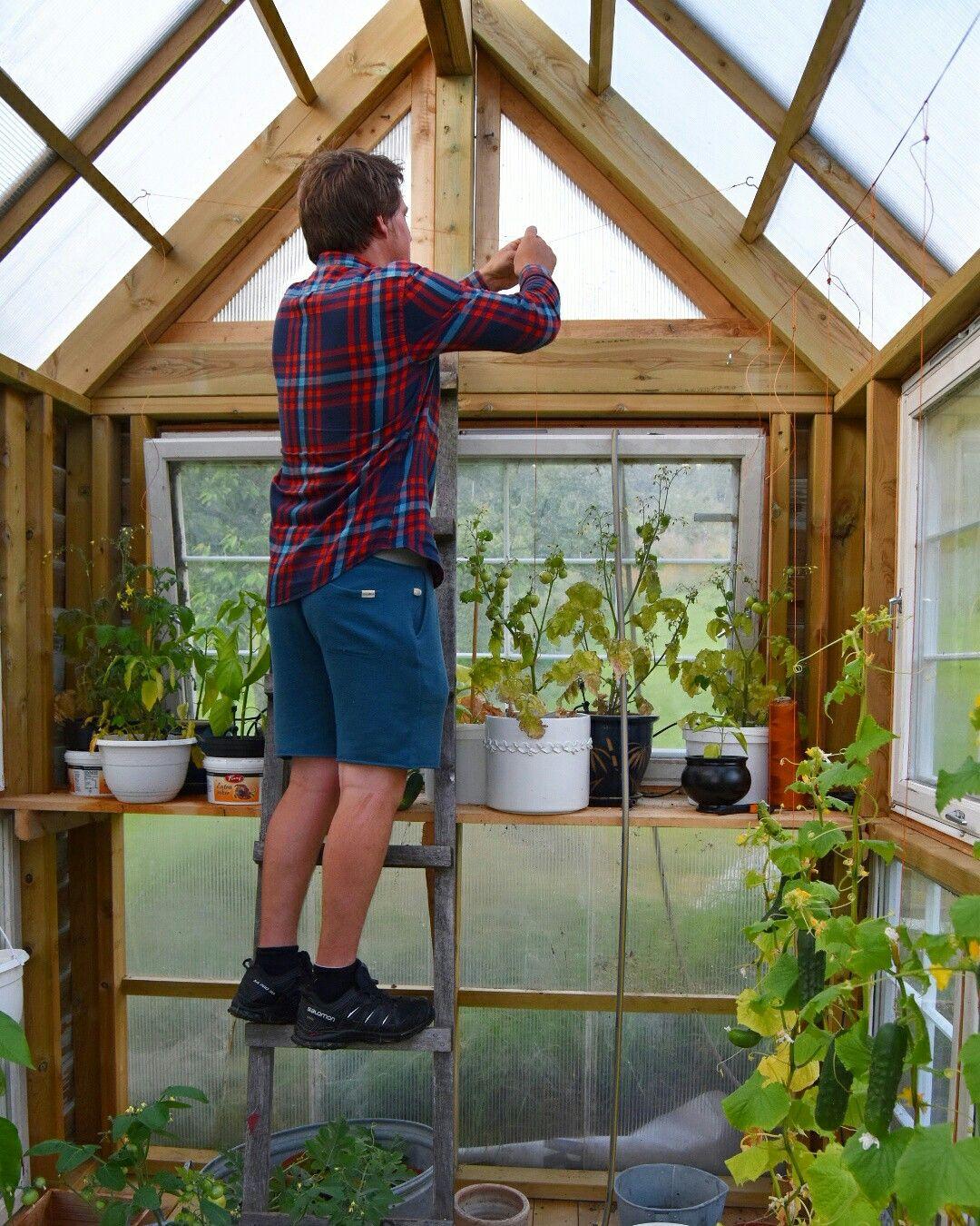 Greenhouse in Southern Norway.  Nordic gardening. Scandinavian garden.