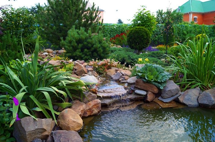 Jardin alpin avec bassin aquatique cascade d 39 eau buis et - Bassin aquatique jardin paysager moderne ...