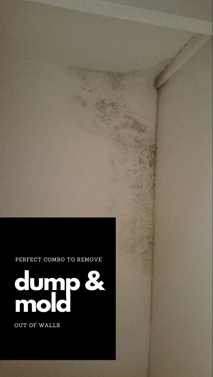 Perfect Combo To Remove Damp And Mold Out Of Walls Perfect Combo To Remove Damp And Mold Out Of Walls