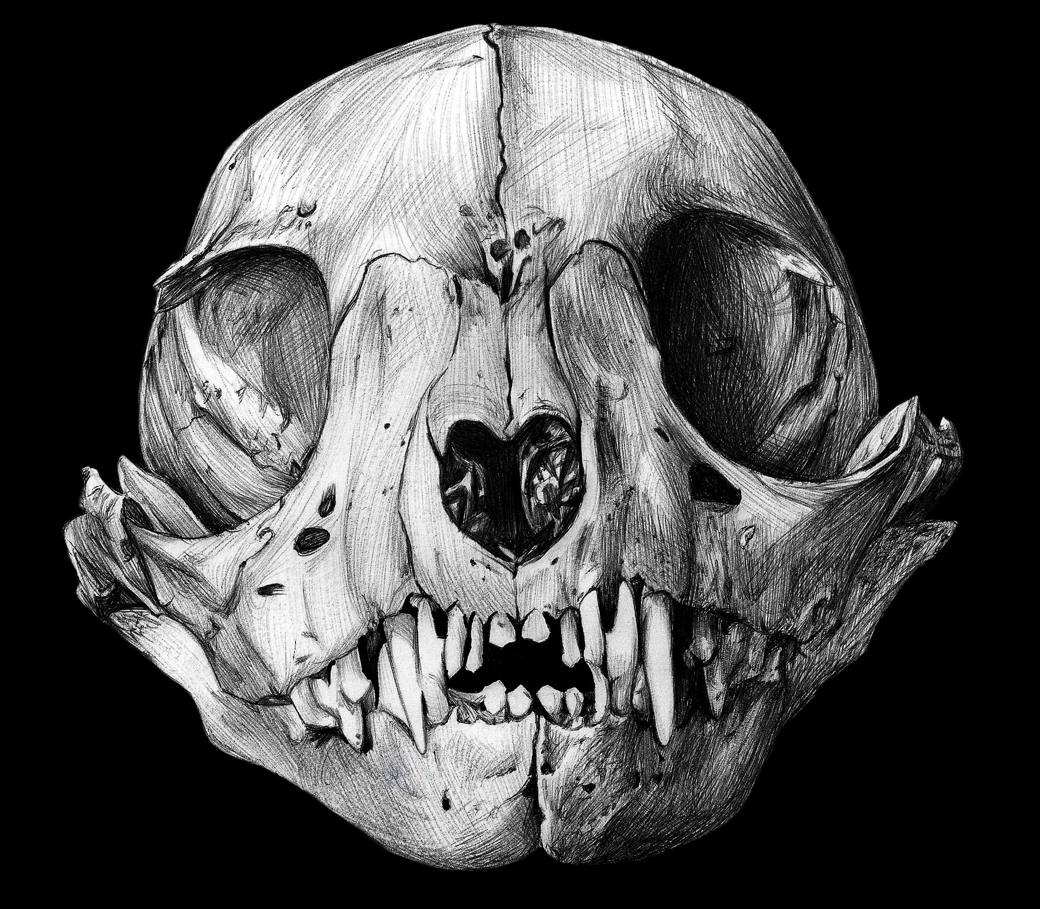 """Skull"" by David Pérez"