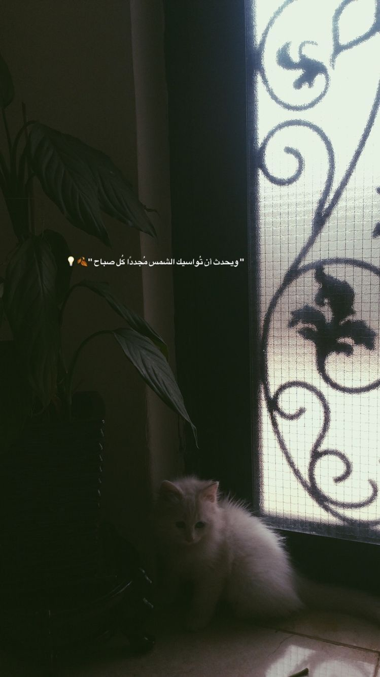 سناب سناب تصوير تصوير سنابات سنابات اقتباسات اقتباسات قهوة قهوة قهوه قهوه Iphone Wallpaper Quotes Love Beautiful Arabic Words Cover Photo Quotes