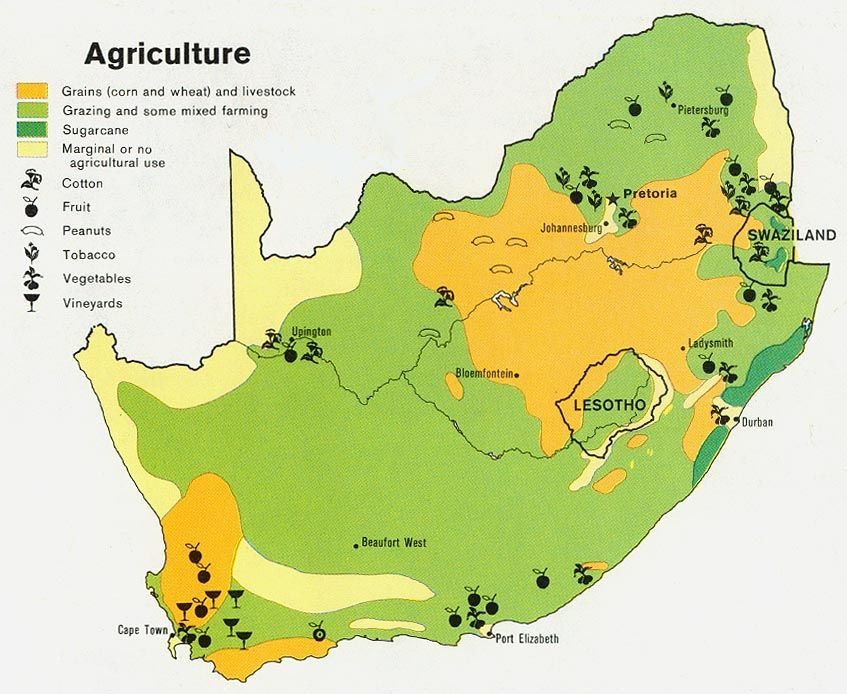 Interesting Look into South Africa's Agriculture! #agriculture