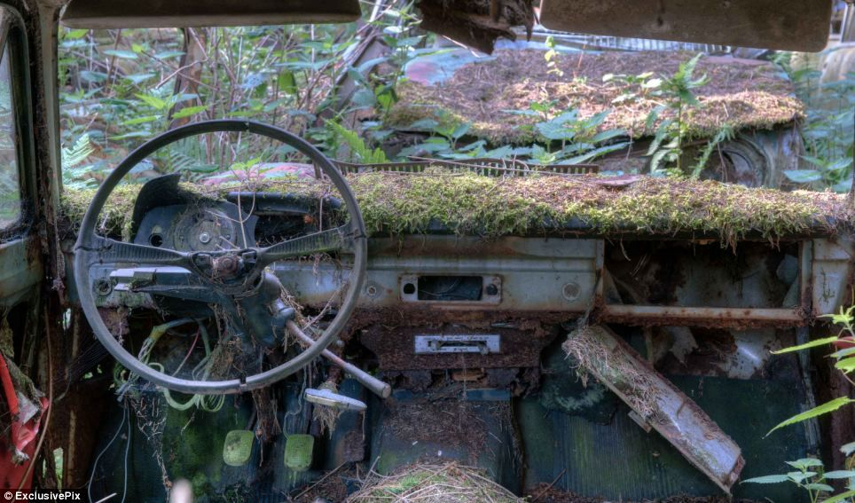 Rust in peace: Haunting pictures of the Belgian \'car graveyard ...