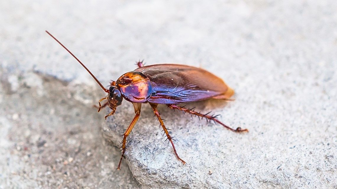 Name A Cockroach After Your Ex Zoo Offers The Perfect Get Even