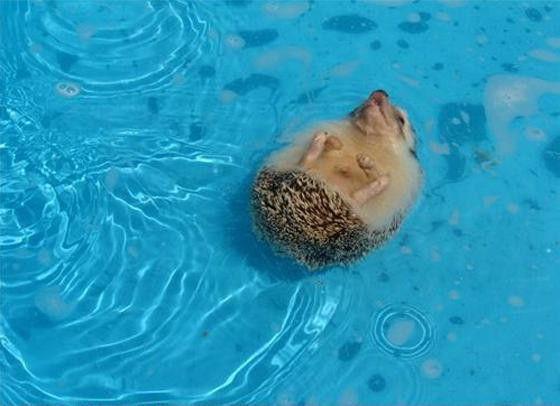 swim swim swim cute