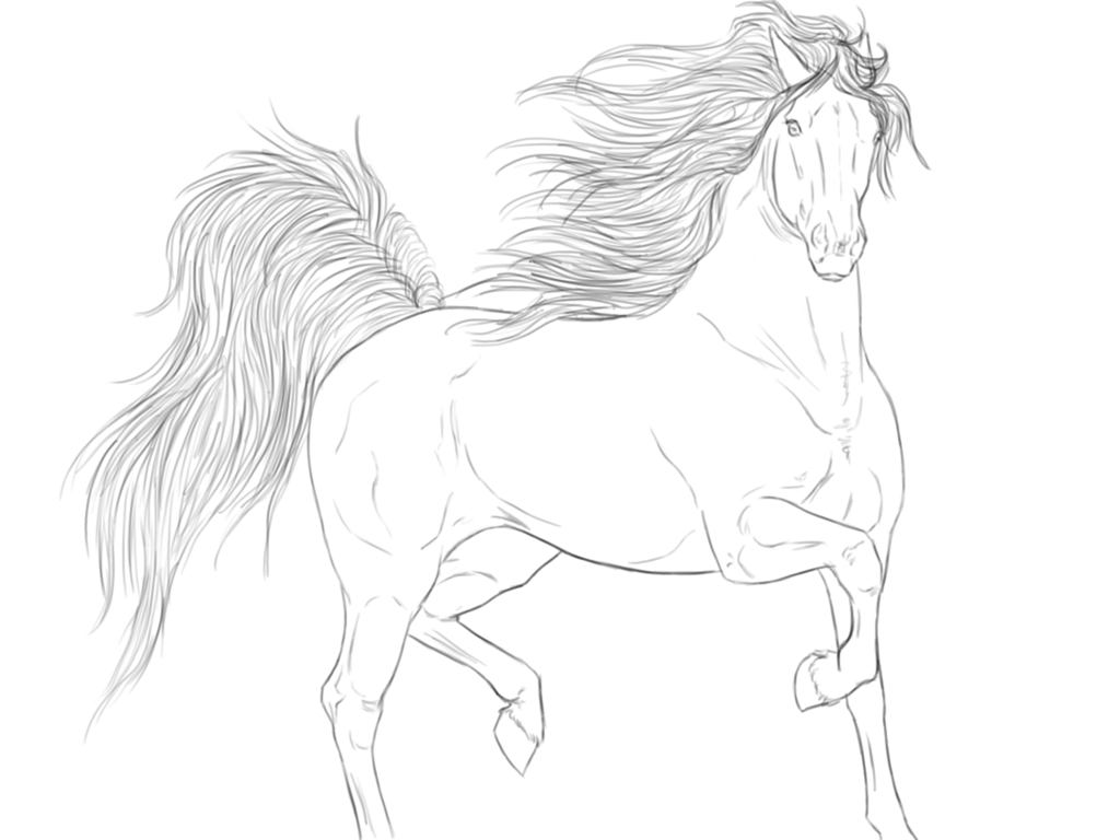 500 best drawings images on pinterest horse drawings drawings