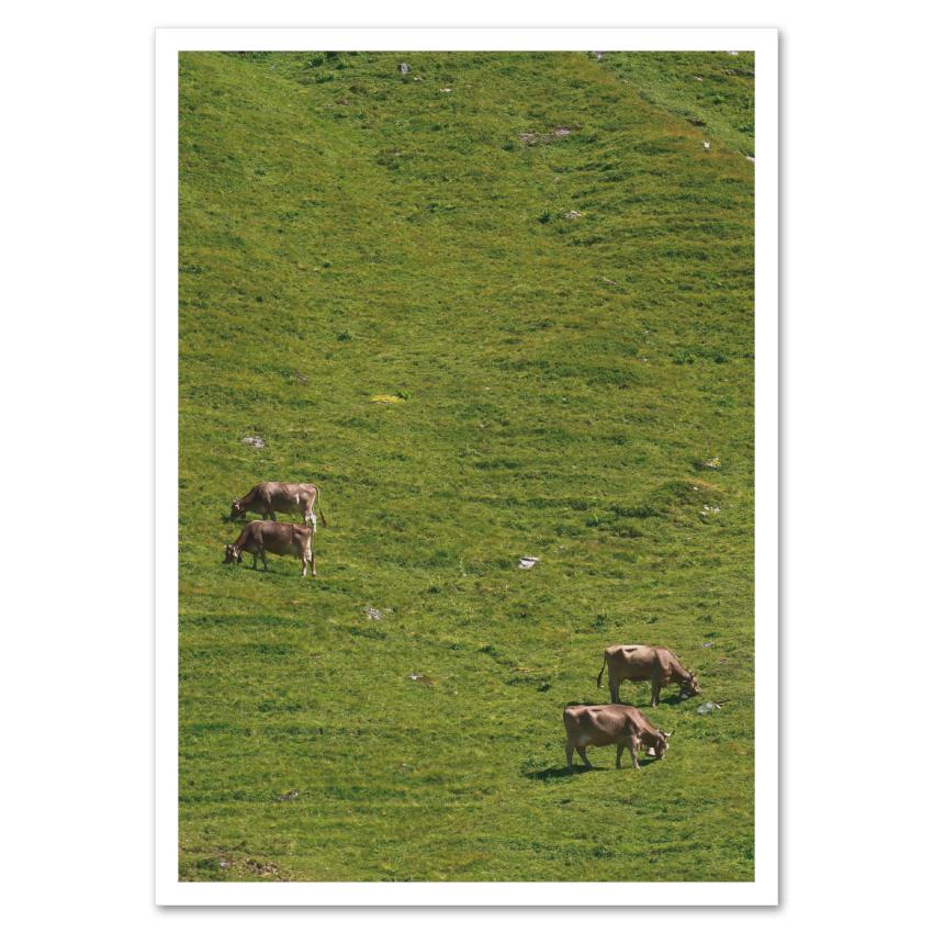Fotokarte »2 x 2 Kühe« http://dickoepfig.ch/produkt/fotokarte-2x2-kuehe/ #suisse #schweiz #switzerland #kuh