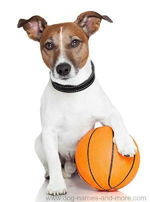 Names For Boy Dogs After Male Athletes | Funny Dog Humor