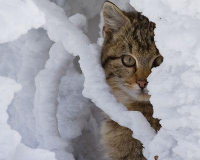 Fotos de gatitos muy tiernos III (12 imágenes gratis) | Banco de Imágenes Gratis .COM (shared via SlingPic)