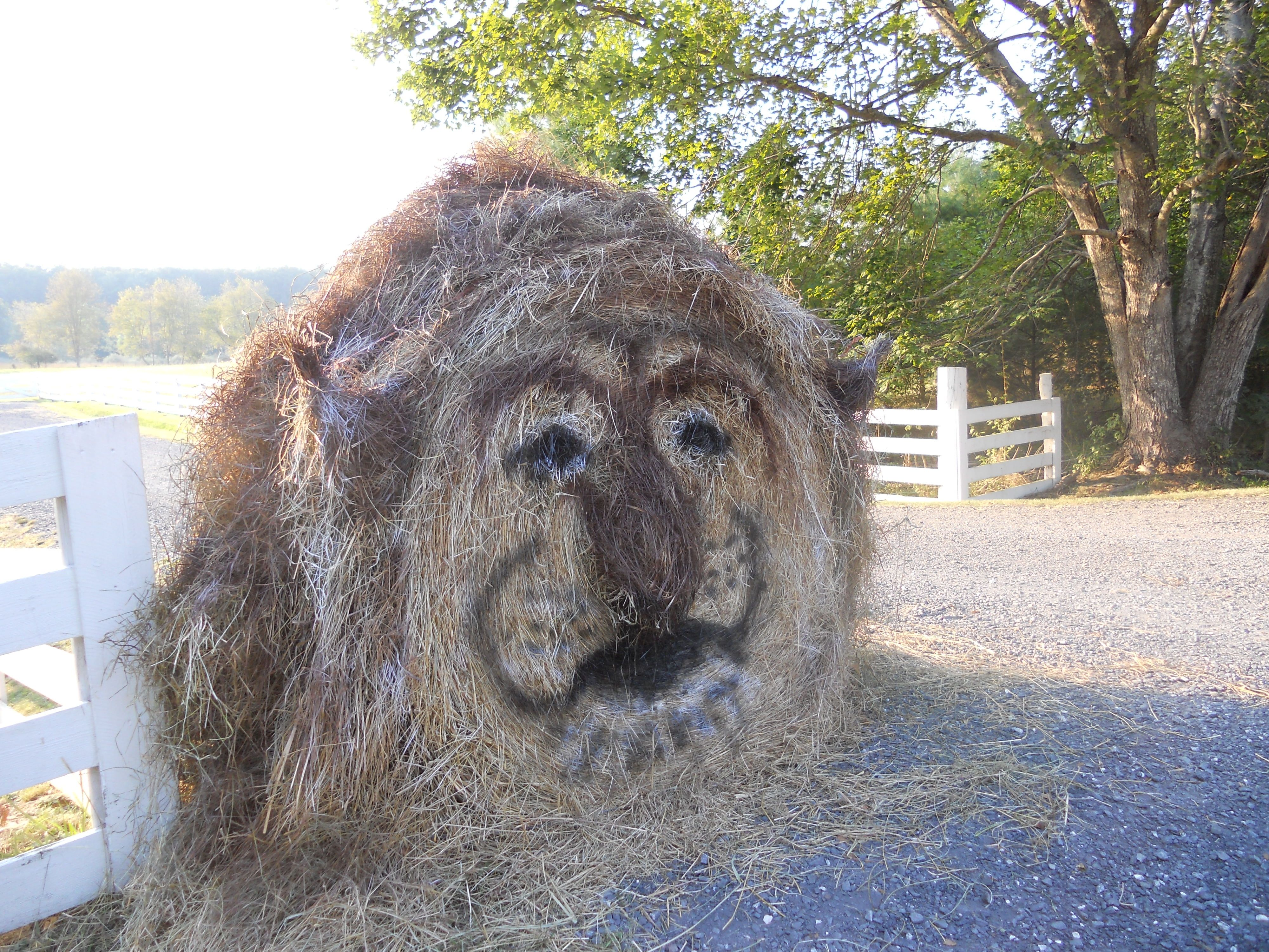 Lion King Hay Bale Decoration With Images Hay Bale