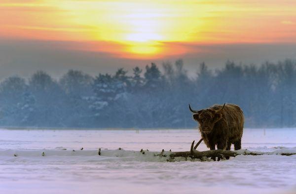 Härkäviikot-sana viittaa metsätöihin, joihin lähdettiin tammipakkasilla. Sanonta lienee peräisin Länsi-Suomesta, jossa tukkireen vetojuhtina käytettiin härkiä. Selkäviikot taas merkitsevät pitkää talven selkää.   Pyhiä seuraavat härkäviikot - S-kanava