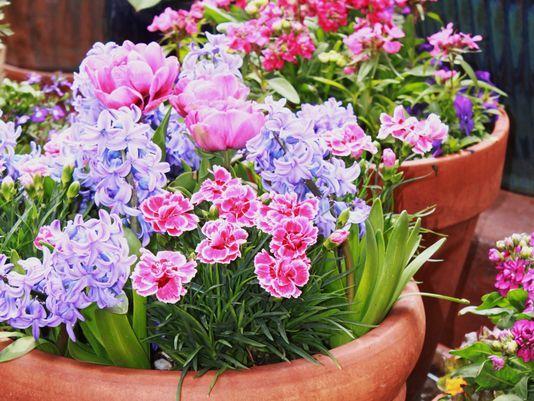 Proctor: Fragrant spring flowers
