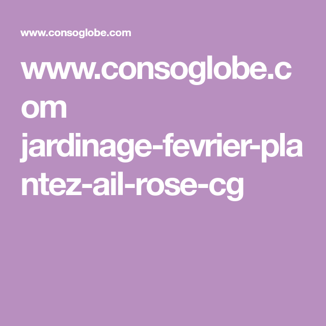 www.consoglobe.com jardinage-fevrier-plantez-ail-rose-cg ...