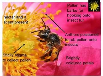 Photo of Sexual reproduction in flowering plants
