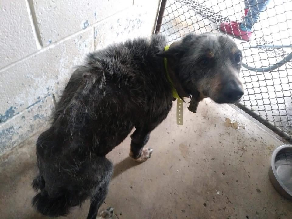 Grandpa Was Old And Left To Die At Texas Shelter Until With Images Dog Rocks Rescue Dogs Animals