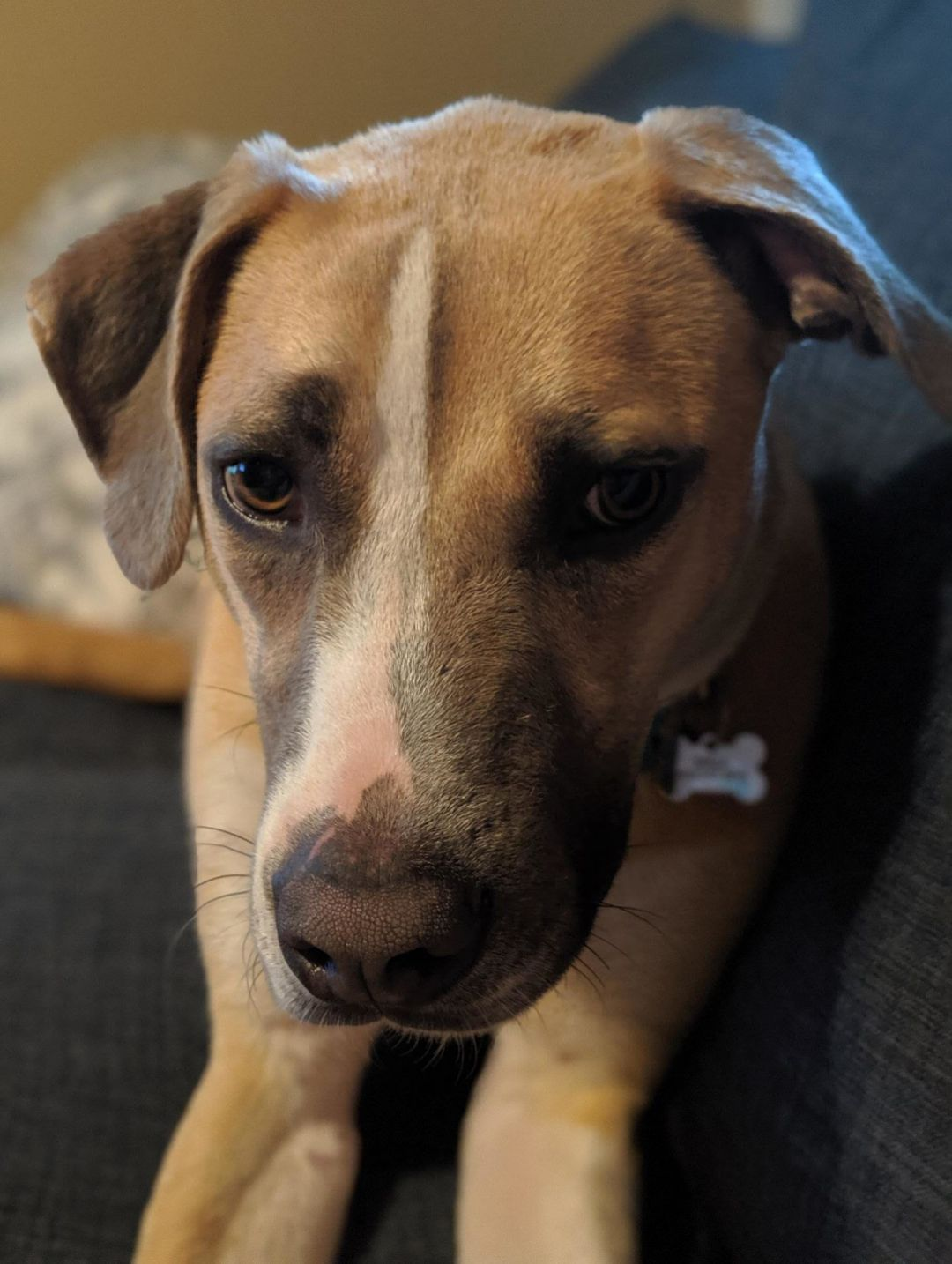 Adopt Toby On Dog Adoption Homeless Pets Pet Adoption