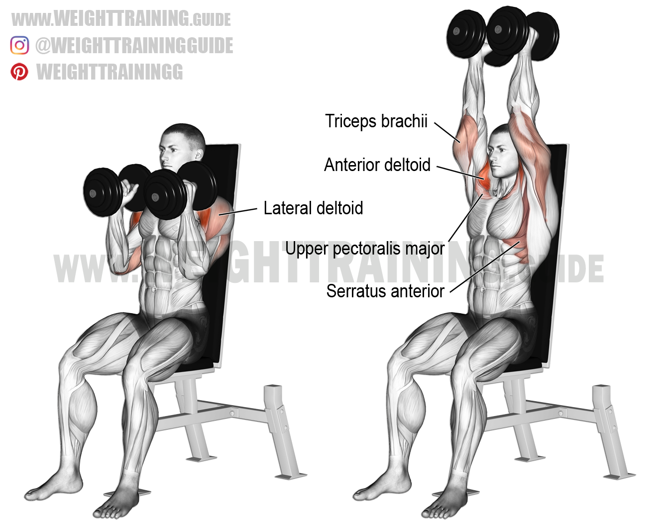 Seated neutral-grip dumbbell overhead press. A compound exercise ...
