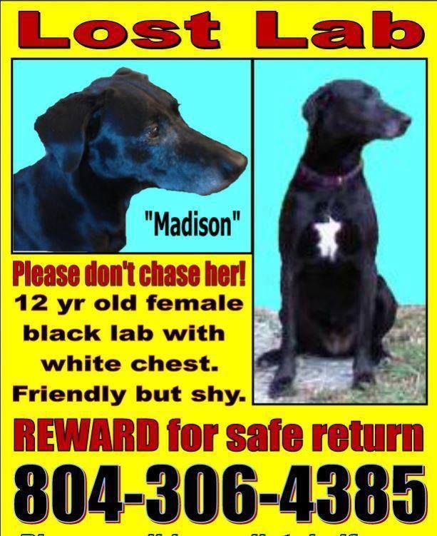 CHESTERFIELD COUNTY, VALOST FEMALE DOG Update 8/15/14