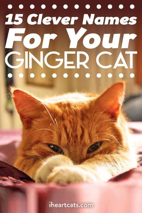 15 Clever Names For Your Ginger Cat Girl Cat Names Kitten Names Boy Tabby Cat Names
