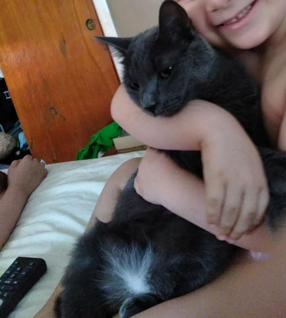 Lost Cat Female Lowell Ma Usa 01850 With Images Lost Cat