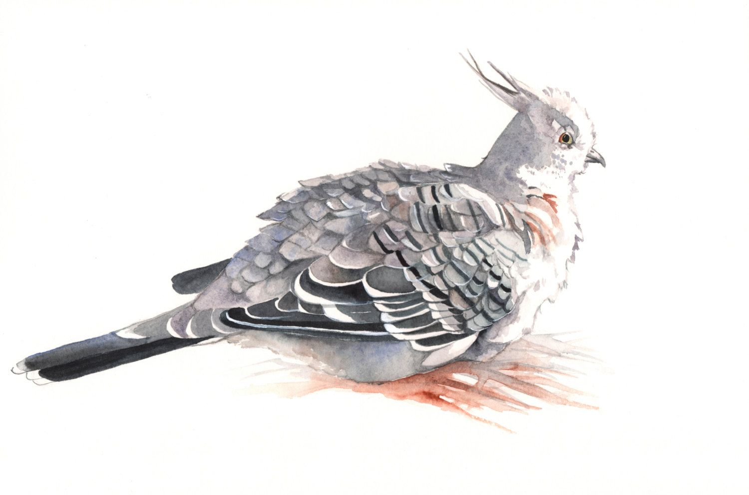 Crested Pigeon watercolor painting