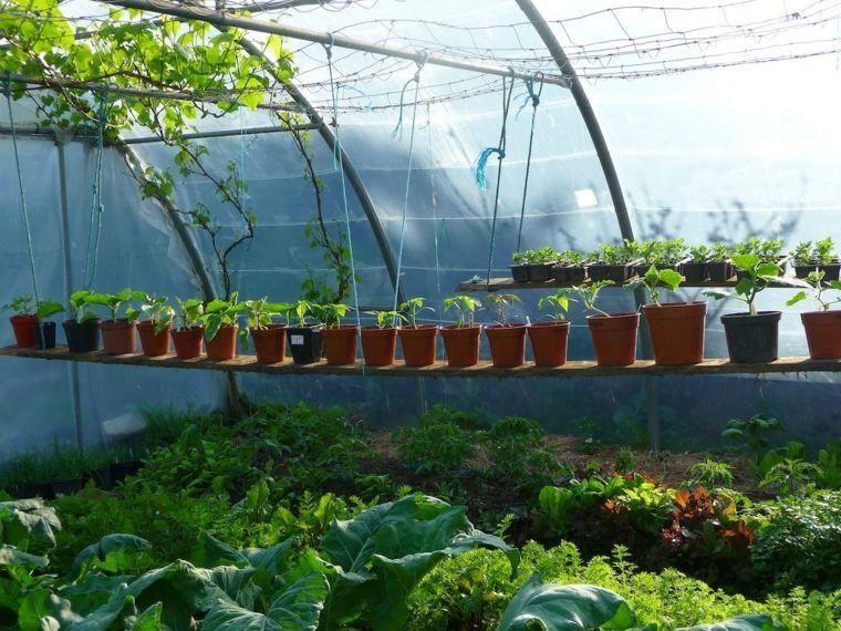 Serre En Plastique Interieur Amenagement Kitchen Garden Garden Diary Layout