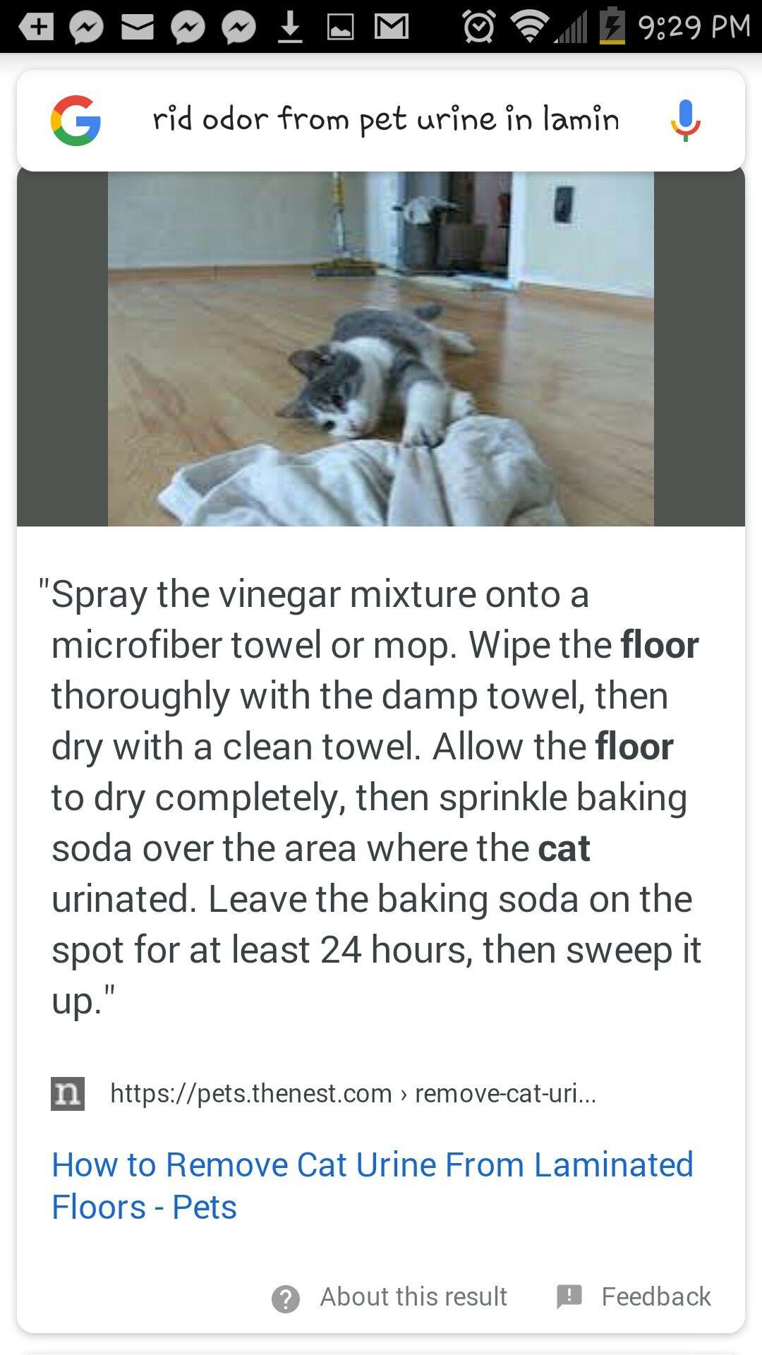 Removing Cat Urine Odor From Laminate Floor Cleaning Cat Urine Pet Odor Remover