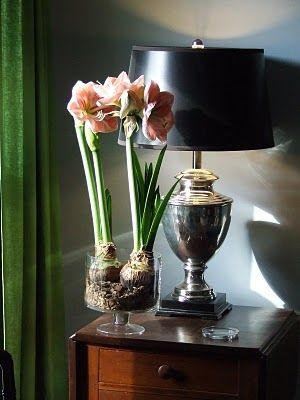 love this vignette ..even with the over scaled amaryllis