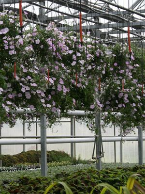 Varner S Greenhouse Nursery Seasonal