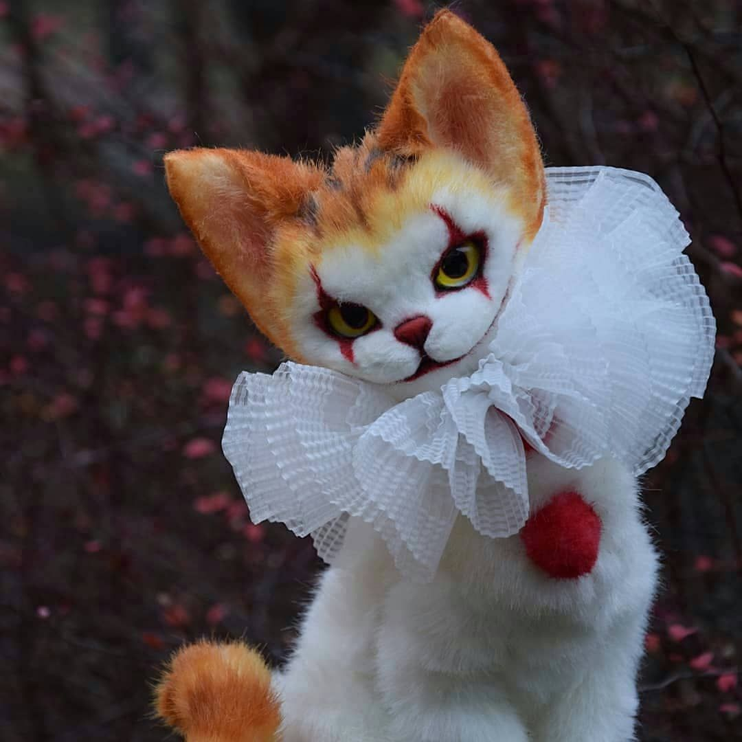 This Is Great Credits To Buzvera Itmovie Pennywise Scary Cat Cute Animals Cute Funny Animals