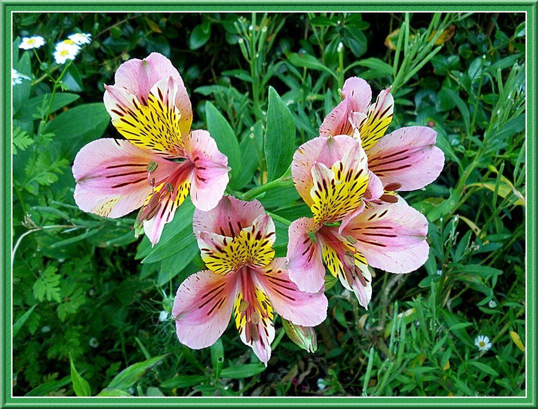 Assez Nom des fleurs avec photos - fleur de passion | FLOWERS / FLEURS  QI84