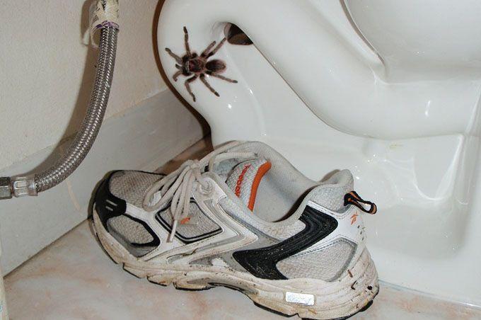 9 astuces naturelles pour faire fuir les araign es de votre maison m nage nettoyage et. Black Bedroom Furniture Sets. Home Design Ideas